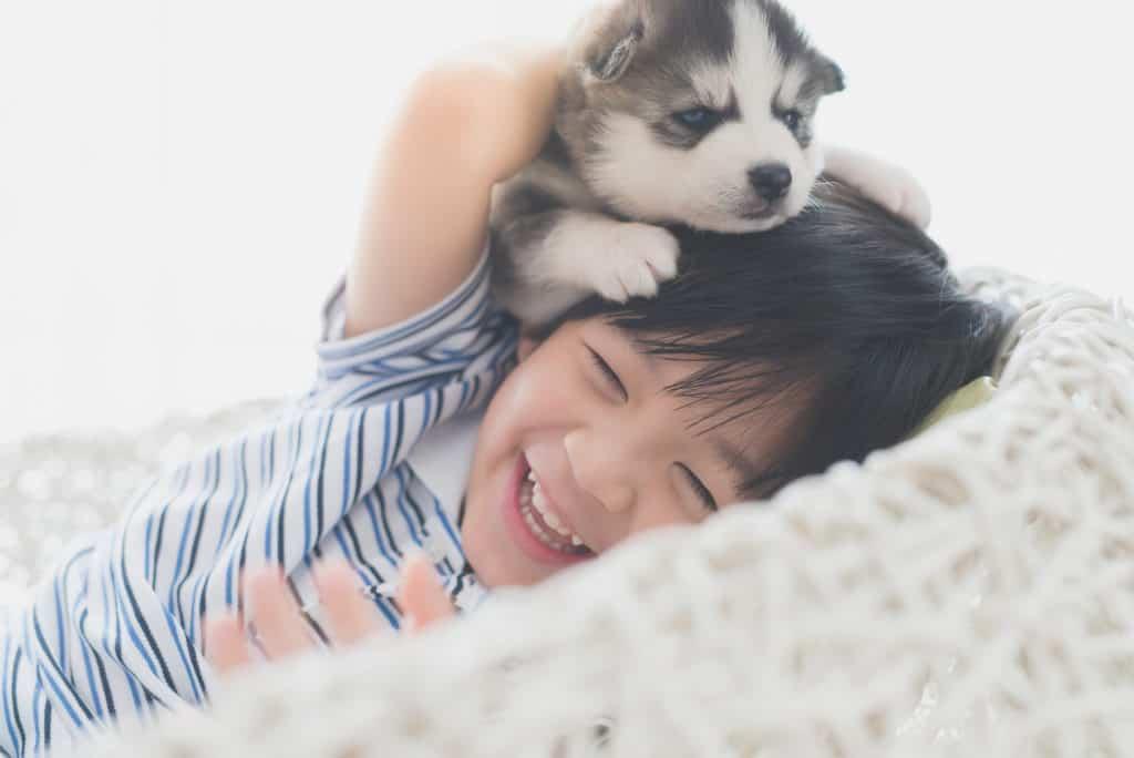 Tìm phòng trọ cho nuôi thú cưng 2